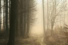 Murky Path
